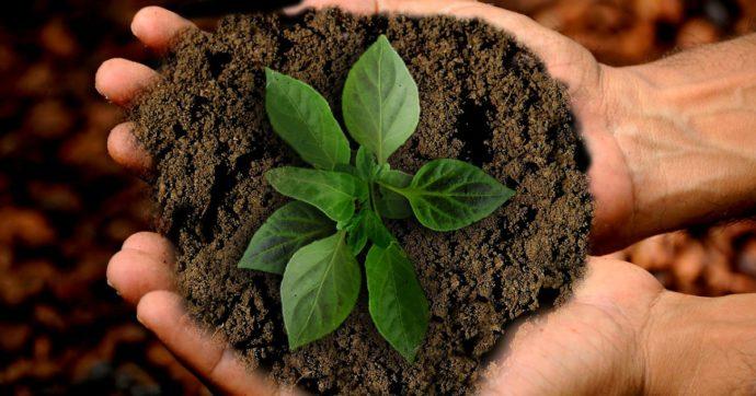 """Agricoltura biodinamica: esoterismo o avanguardia green? """"Applichiamo regole che l'Europa pone come obiettivi per il 2030"""""""