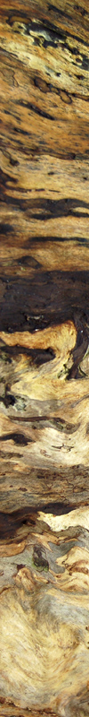 Higru Holz