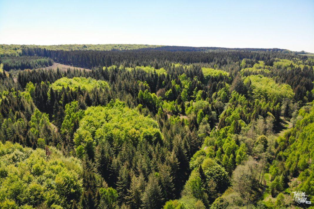 Forêt de Saint-Hubert