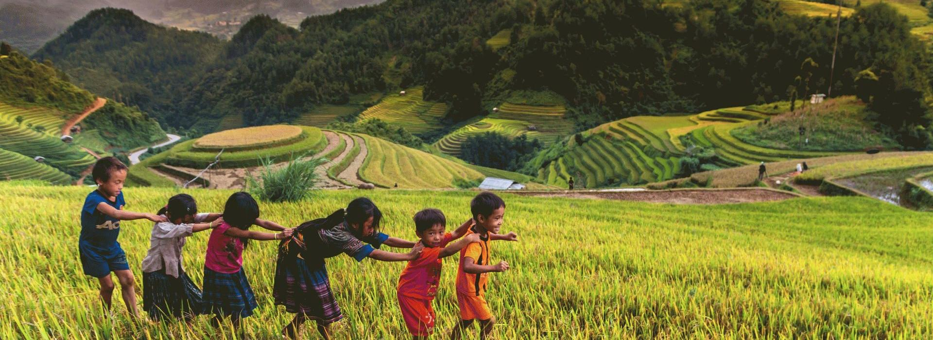 Sapa tours in September to October with stunning golden terraced fields