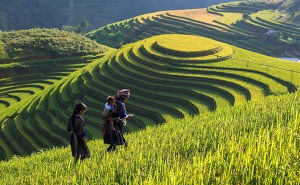 The picturesque scenery of Sapa in the golden season