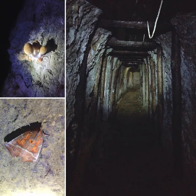 Miniere di Corchia