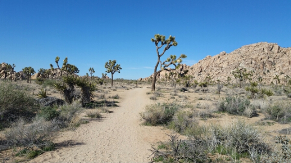 A Tale of Two Deserts: Joshua Tree National Park