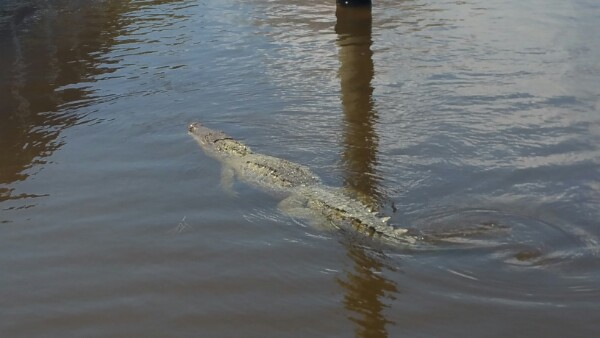 Where Alligators and Crocodiles Roam: Everglades National Park