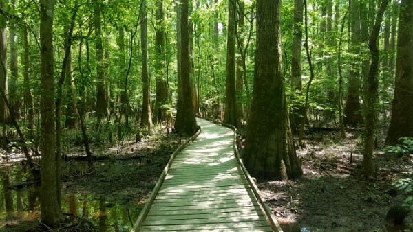 ​A Swampy Forest: Congaree National Park