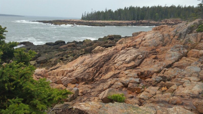 Anything but Barren: Acadia National Park