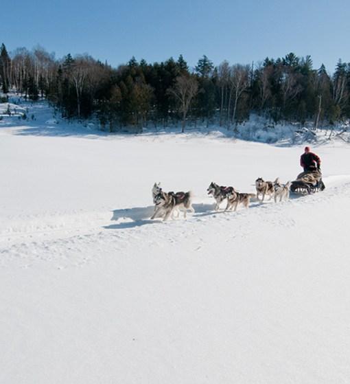 Dogsledding - Mont Tremblant