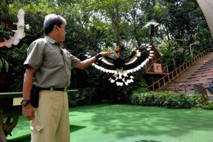mohd-saad-bin-yahya-supervisor-of-animal-presentation-with-sunny-the-hornbill-at-pools-amphitheatre
