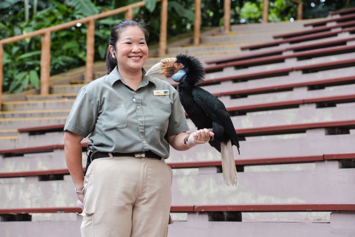 show-presenter-eileen-lim-with-harriet-a-bar-pouched-wreathed-hornbill