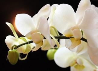 O storczykach - uprawa, podłoże, orchidarium