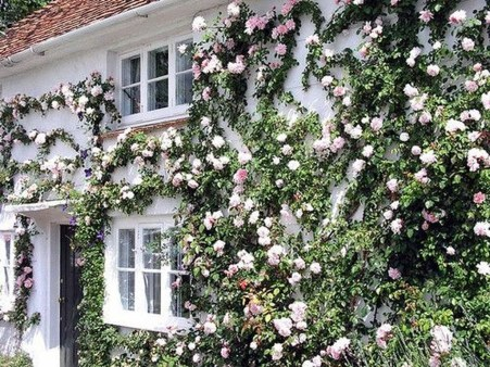 Beautiful Facades With Vines And Climbers 01