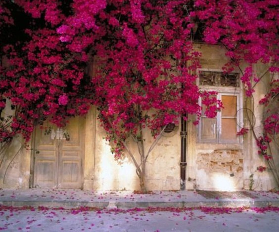 Beautiful Facades With Vines And Climbers 11