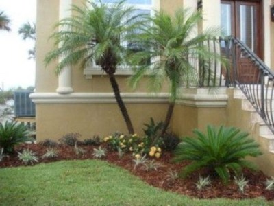 Cute Palm Gardening Ideas For Front Yard 21