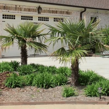 Cute Palm Gardening Ideas For Front Yard 37
