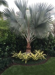 Cute Palm Gardening Ideas For Front Yard 44