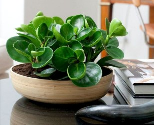 Magnificient Indoor Decorative Ideas With Plants 05