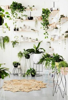 Magnificient Indoor Decorative Ideas With Plants 12
