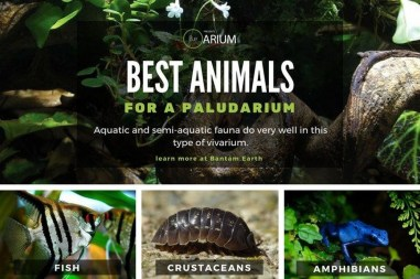Rustic Houseplants Design Ideas That Are Safe For Animals 06