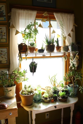 Lovely Window Design Ideas With Plants That Make Your Home Cozy 38