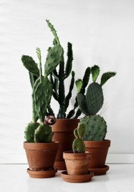 Cool Small Cactus Ideas For Interior Home Design19
