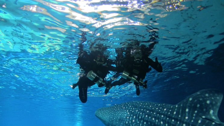 scubadiving-best-adventures-to-do