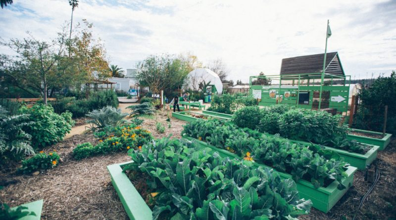 Benefits of Involving in Organic Gardening