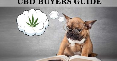 best CBD oil for cats & dogs