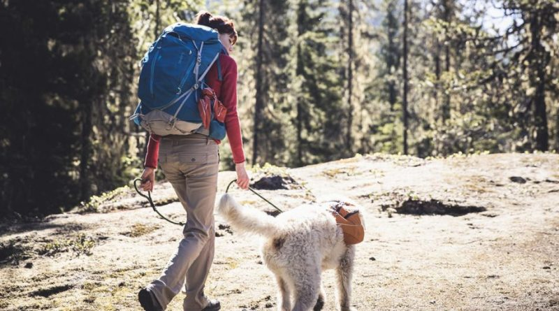 how to go backpacking with a dog