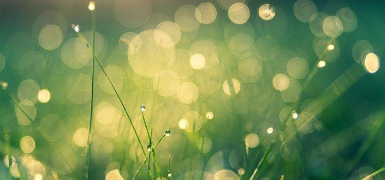 Green Light Alliance Introduction