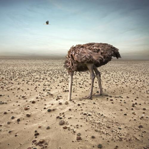Głowa w piasek Fotografia Art Photography Fotoklimat