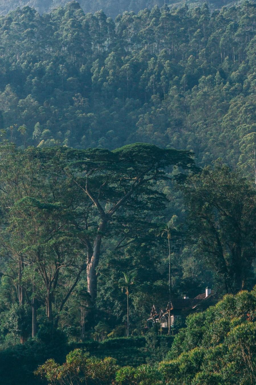 Sri Lanka-42.jpg