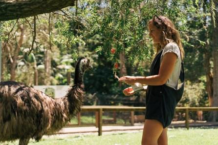 Centre de protection des animaux sauvages - Gold Coast - Australie