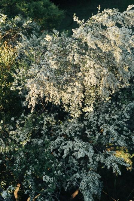 Parterre de fleurs - Blue Mountains - Australie