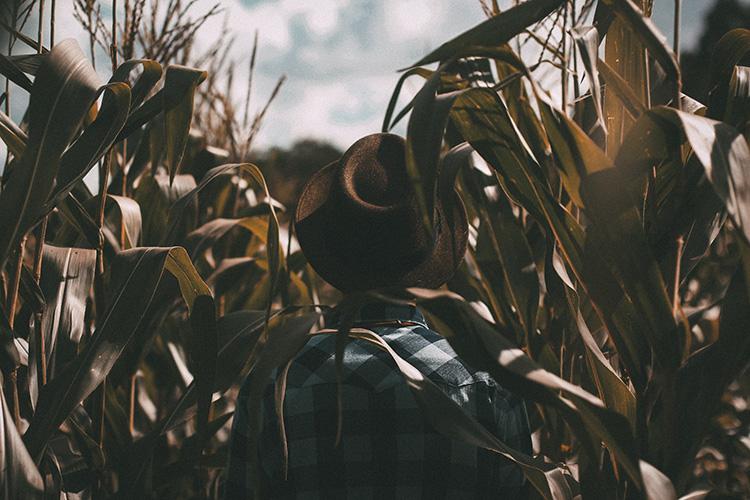 farmer's back walking through corn field