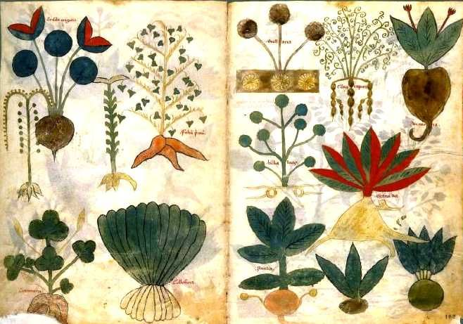 Dioscorides Materia Medica - Ancient Herbal Medicine Drawings
