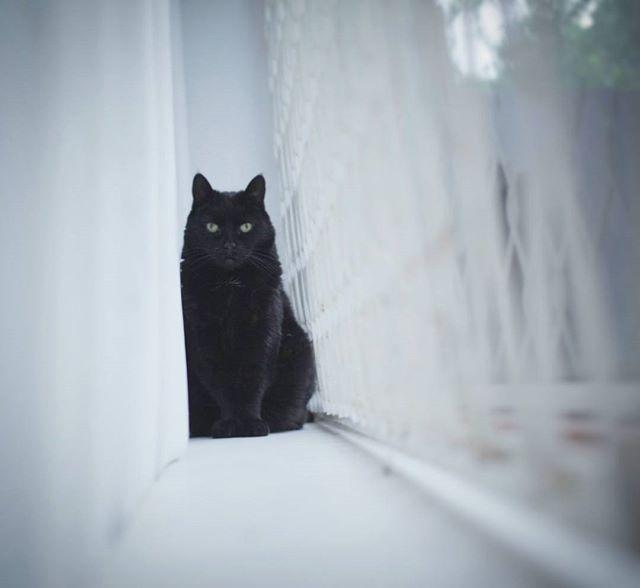 Instagram Post - #cats #love #catsofinstagram #london #ealing #photooftheday