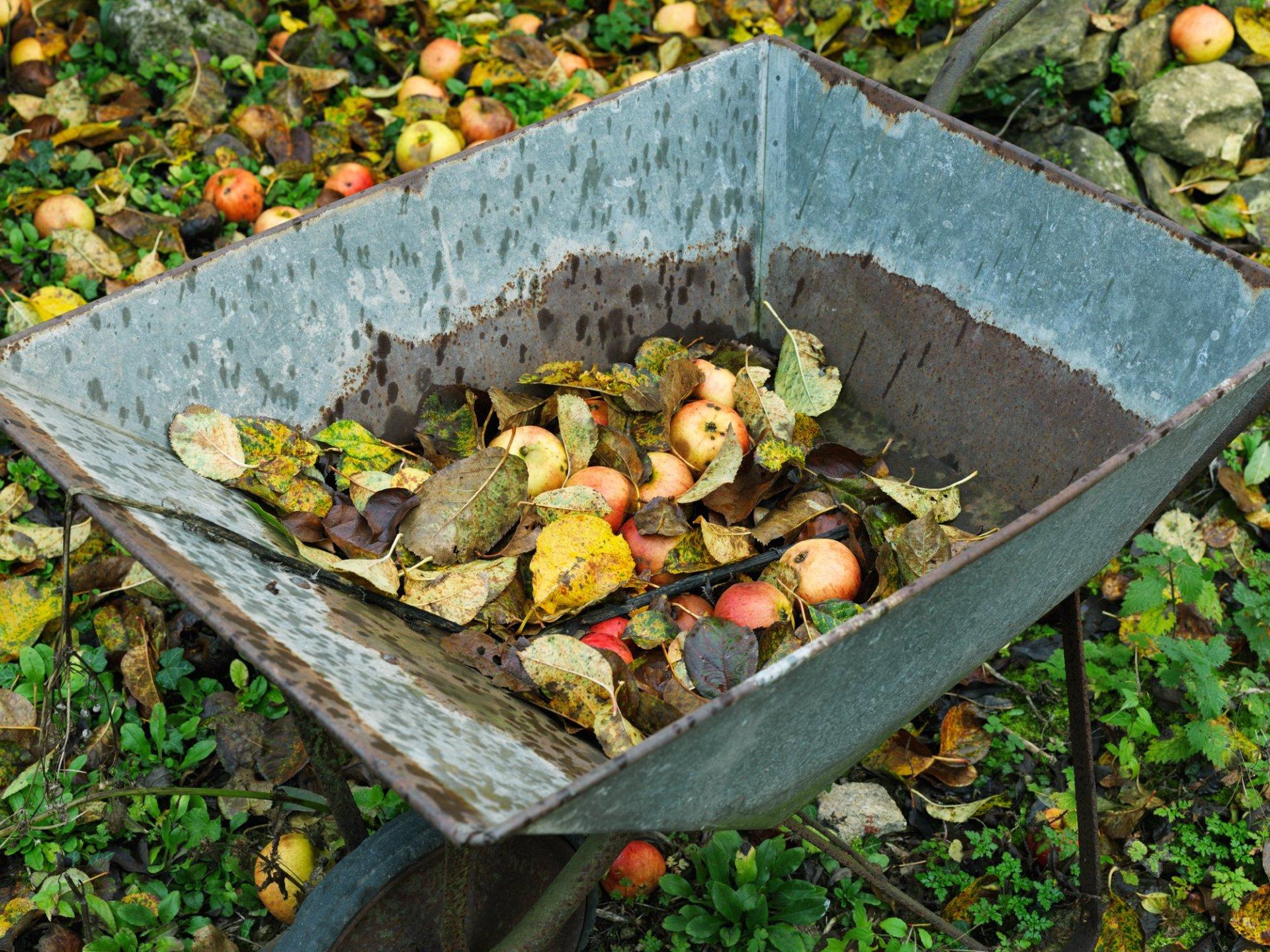Apples and wheelbarrow Windrush Gloucestershire 2011