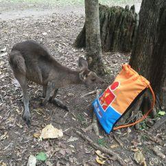IRONMAN und Australien - das passt!