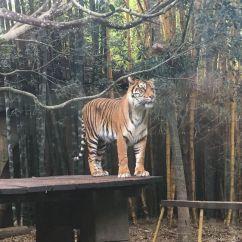 Der Australian Zoo hat vieles zu bieten