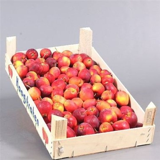 Apple Malus Red