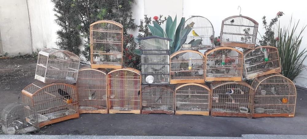 Pássaros silvestres são resgatados de cativeiro em Campos