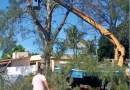SFI: Sema realiza poda de árvores em vias públicas e unidades municipais
