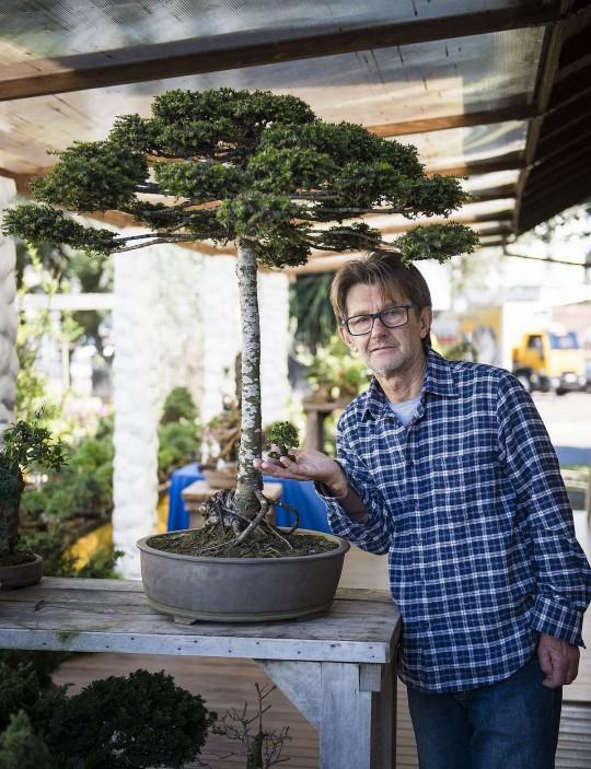 Renato Hoenig, bonsaista que transformou uma Araucária em bonsai / Foto: Letícia Akemi / Tribuna do Paraná