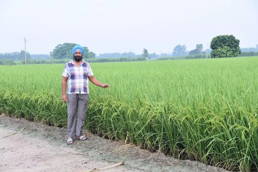 A Progressive Farmer From Nawanshahr  Has Set Path Breaking  Trend in Stubble Management