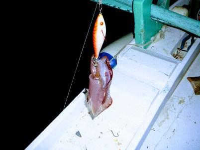 calamare (2)