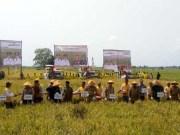 Panen Raya di Desa Pematang Singkek Kecamatan Rimba Melintang Kabupaten Rohil