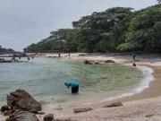 Pulau Jemur di Rokan Hilir