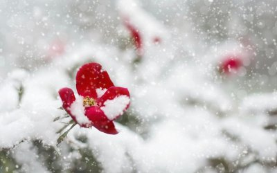 Springtime Snow and Sad Days