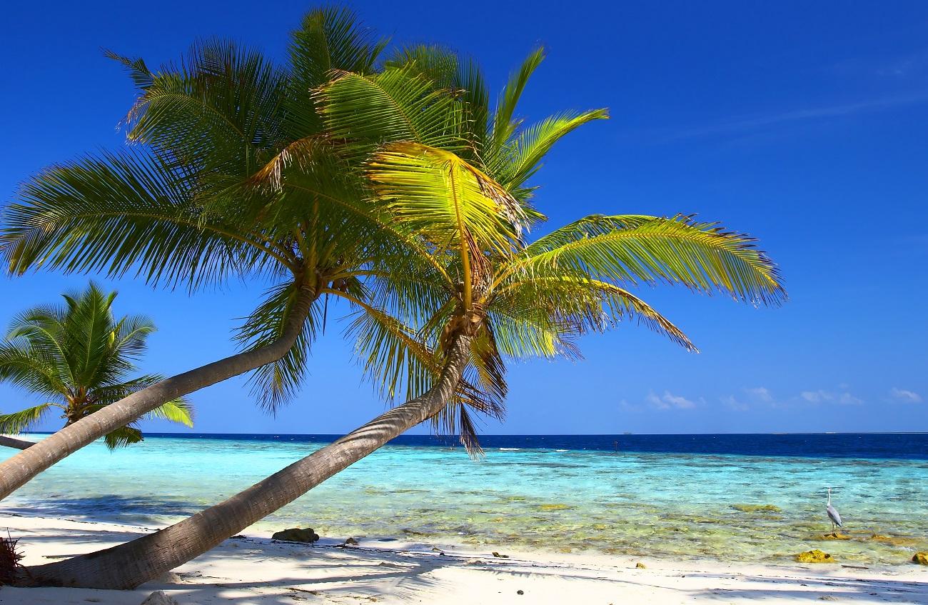 bigstock-PHENOMENAL-BEACH-WITH-PALM-TRE-832893