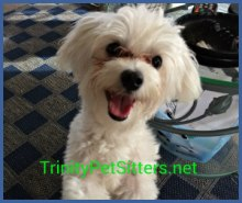 Trinity Pets Yappy Hour March 2019